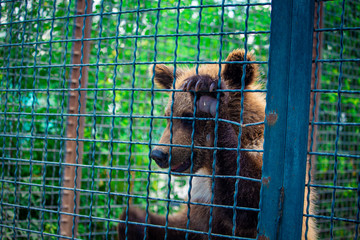 bear cub in a cage