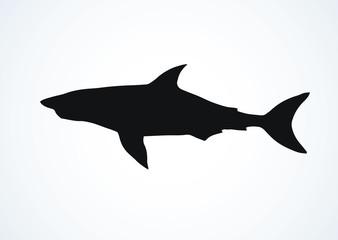 Shark. Vector drawing