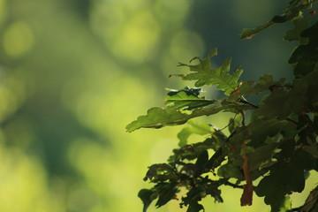 Stores à enrouleur Nature natuurlijke groene achtergrond