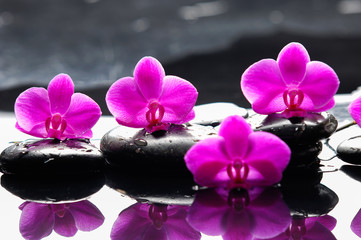still life with red orchid on black stones