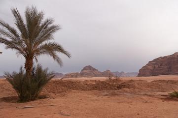 Wadi Rum - 8