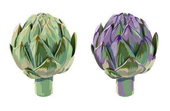 vector set of illustration green and violet vegetables artichoke on white background