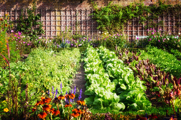 Photo sur Plexiglas Jardin Vegetable garden
