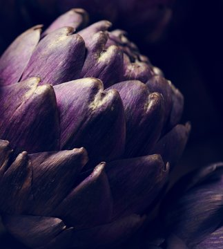 Closeup of a fresh artichoke
