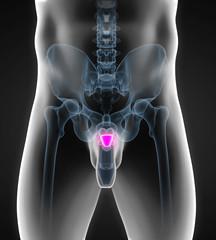 Human Prostate Gland