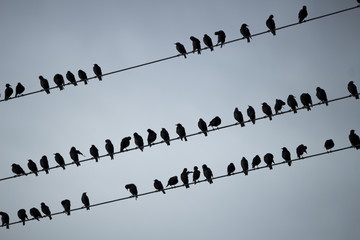 Panorama of the swallows on wire on background of the blue sky