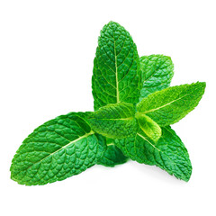 Fresh raw mint leaf isolated on white background. Spearmint leaves, peppermint macro.