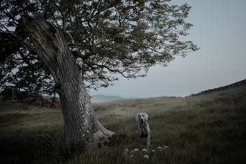 A single tree and a dog in a field