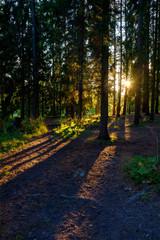 Fototapeta Sun rays alone in the woods