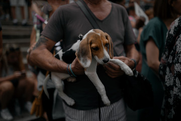 Man carrying a puppy