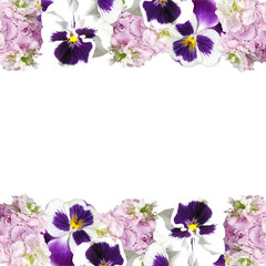 Beautiful floral background from pelargonium and pansies