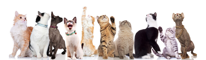 group of ten cute cats looks up