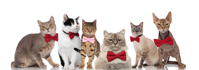 six gentleman cats standing, sitting and lying on white background