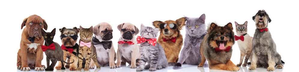 adorable team of stylish cats and dogs with bowties