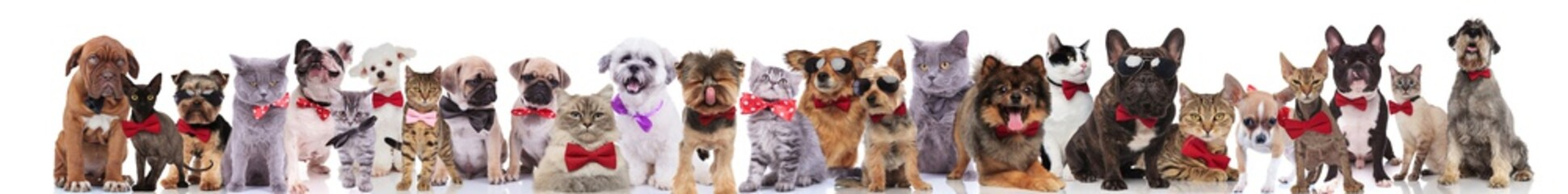 many cute cats and dogs wearing bowties and sunglasses