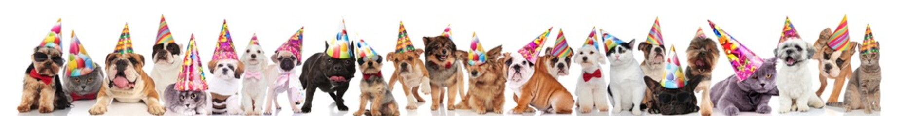 many happy pets wearing birthday hats, sunglasses and bowties