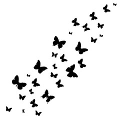vector, isolated, background with butterflies silhouette flying
