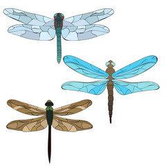 isolated, dragonfly, insect