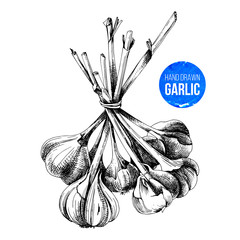 Hand drawn bunch of garlic