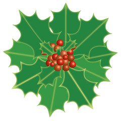 Holly Berry. Christmas theme symbolic plants holly, vector format and jpg.