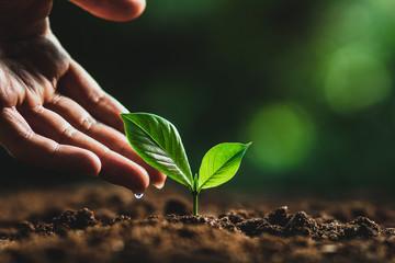Fototapeta plant tree in neutral background Close-Up Of Fresh Green Plant obraz