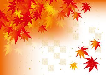 赤アミチェック 秋 紅葉