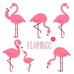 Tropical Bird Flamingos. Vector.