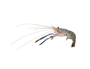 Giant freshwater prawn, Fresh shrimp isolate on white background