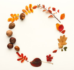 Autumn leaves and nuts in circle frame isolated on white