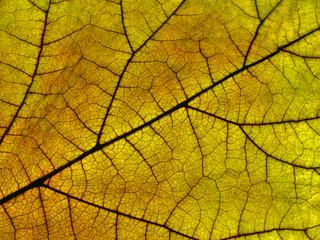 Nahaufnahme eines Blattes in Herbstfarben