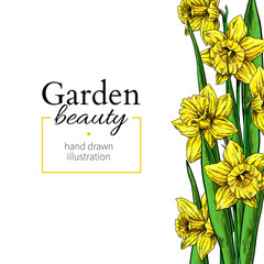 Daffodil flower and leaves border drawing. Vector hand drawn floral frame.