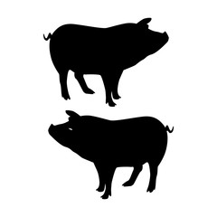 Silhouette Pig, on white background,
