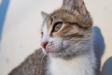 Portrait of a gray cat close
