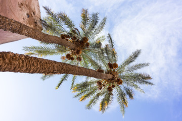 two palm tree with blue sky