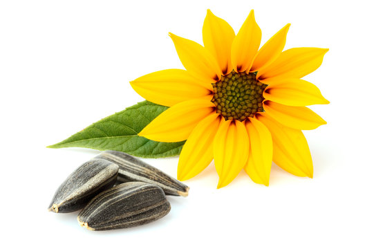 Sunflower seeds with flower isolated.