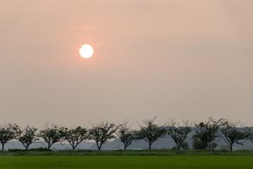 Dusk scenery of the rice field in Sakura city, Chiba Prefecture, Japan