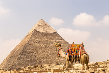 Camel near pyramids and ankh in desert.
