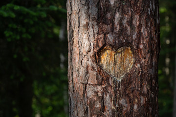 Heart Carved into Tree Trunk in Forest  Wall mural