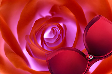 red bra  isolated on rose  flower  background