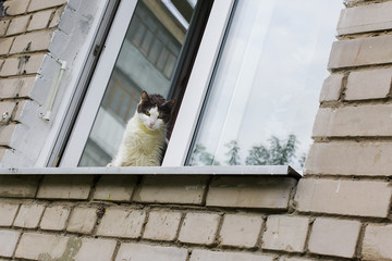 white cat sitting on the window