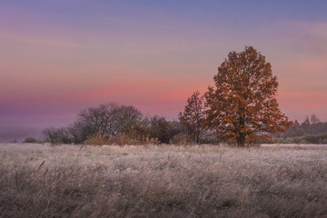 Autumn landscape at dawn. Colorful trees on meadow. Fall. Scenery autumn in early morning with beautiful color sky on sunrise.