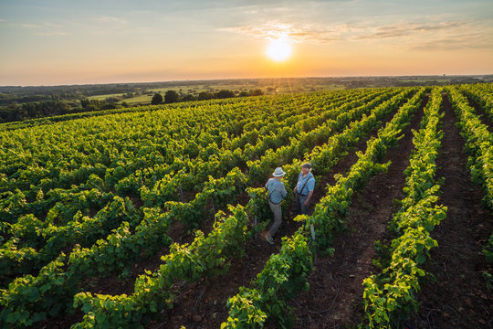 Top view. Two French winegrowers in their vines at sunset
