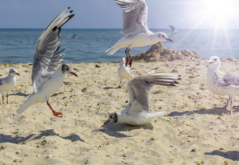 flock of seagulls on the beach on a summer sunny day