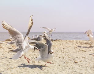 sea gulls on the beach in a summer  day
