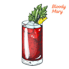 Bloody Mary cocktail illustration. Alcoholic cocktails hand drawn vector illustration.