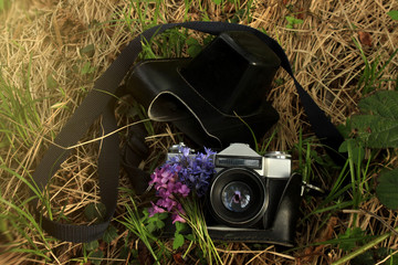 old  film photo camera with spring flowers, on the background of grass