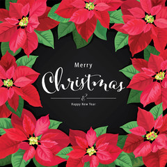 Poinsettia Flowers in red and green color on black background. Vector set of Christmas elements for holiday invitations, greeting card and advertising design.