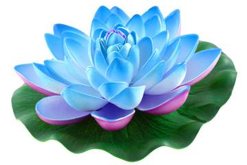 nénuphar bleu, fond blanc