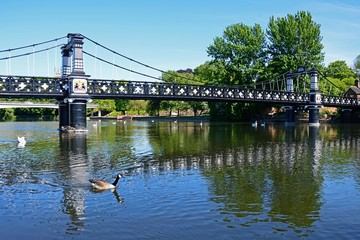 View of the Ferry Bridge also known as the Stapenhill Ferry Bridge and the River Trent, Burton upon Trent, UK.