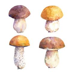 Watercolor set of edible mushrooms. Different types of boletus mushrooms